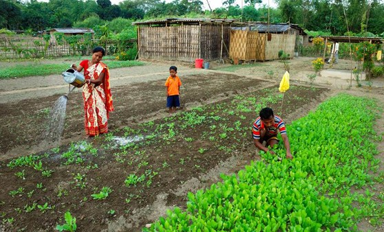 A micro-plot in Dorko Village of West Bengal, India